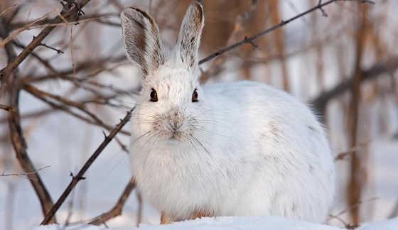 Охота на зайца: Легко и быстро