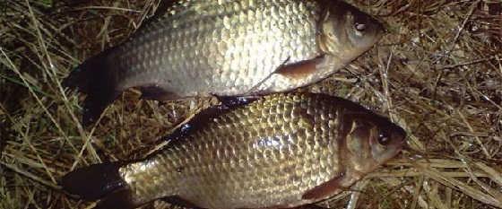 Ночная рыбалка осенью