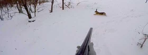Охота на зайцев с подхода