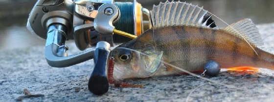 Ловля окуня на микроджиг: Поиск рыбы и выбор приманок