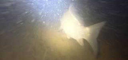 Подводная охота в ноябре в полнолуние 2019