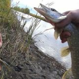 Рыбалка на щуку на озере осенью 2019