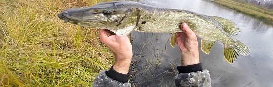 Рыбалка в Ноябре на Спиннинг