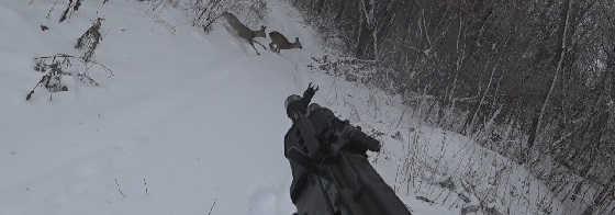 Загонная и Трудовая Охота на косулю