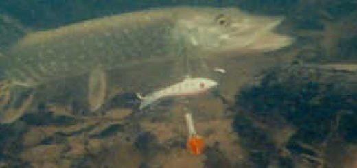 Зимняя рыбалка на щуку на балансир