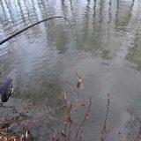 Где искать хищника на реке?