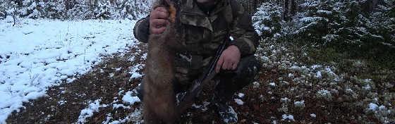 Охота с ИЖ-54 в Коми