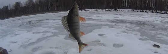 Ловля мелкого окуня на маленьком озере