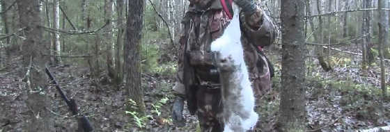 Охота на хитрого зайца-беляка