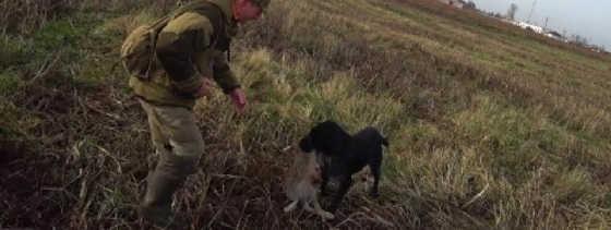 Охота на зайца в Беларуси 2019