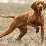 Как научить собаку не трогать капканы и ловушки