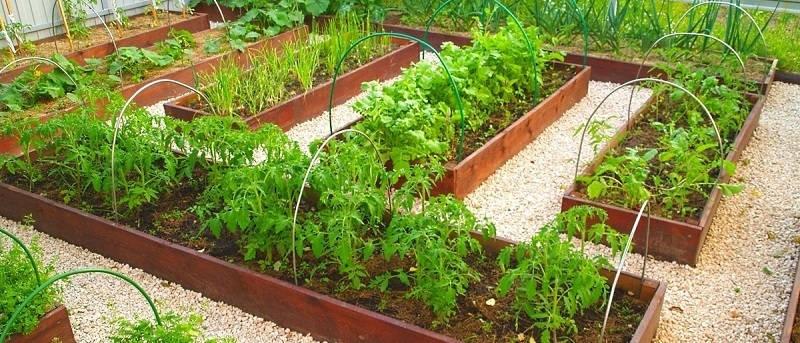 Практическая польза от огорода