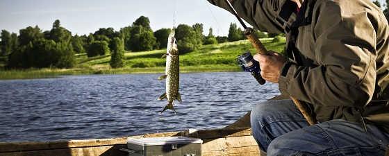 Как поймать рыбу, когда не клюет?