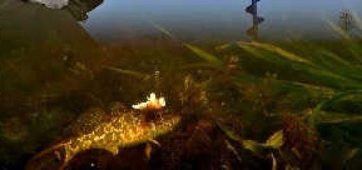 Рыбалка зимой на озере на блесну с салом