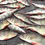 Рыбалка зимой: Оснастка, тактика и техника
