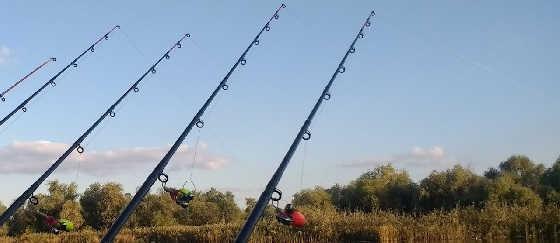 Рыбалка с берега днем сход КАРПА