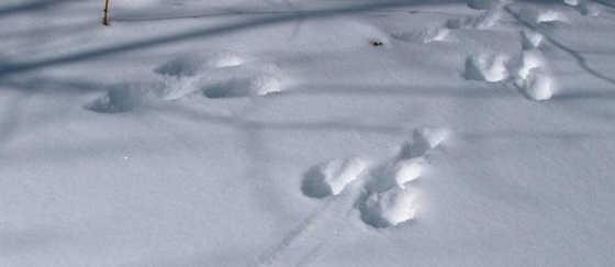 Как найти зайца по обратному следу