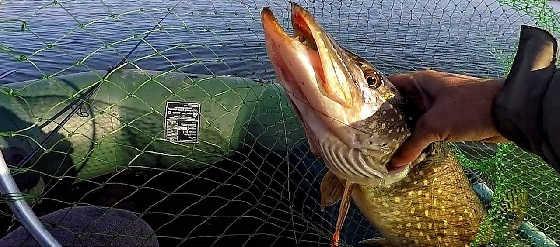 Трофейная рыбалка на Щуку