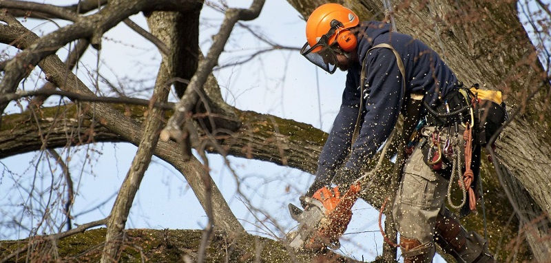 Удаление деревьев альпинистами CRAZYALP - это быстро и безопасно