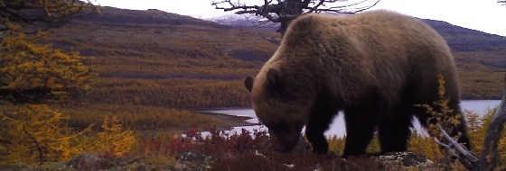 Ночные утехи медведя