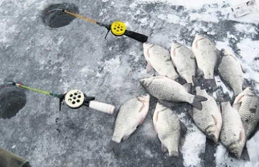 Зимняя ловля карася