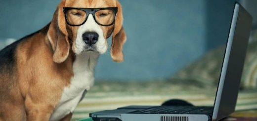 Уровень интеллекта собаки