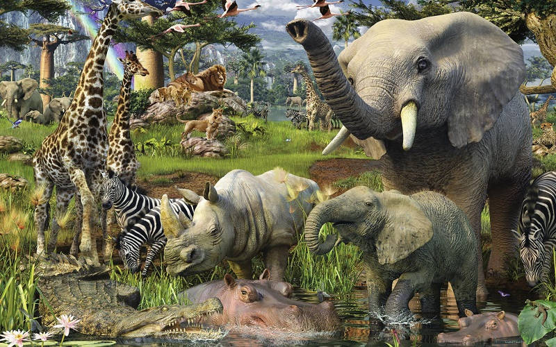 Животный мир Африки изобилует своим разнообразием