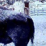Какие животные живут в Якутии