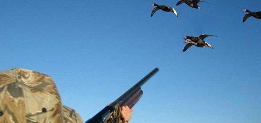 Охота на водоплавающую птицу