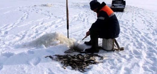 Рыбалка наваги зимой