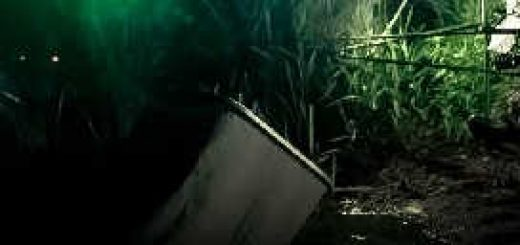 Ловля на Фидер ночью: Патерностер