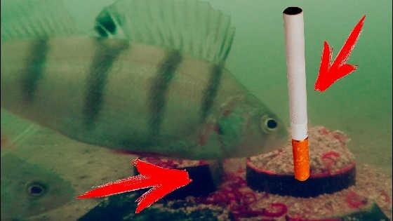 ЗАПАХ ТАБАКА и Реакция Рыбы