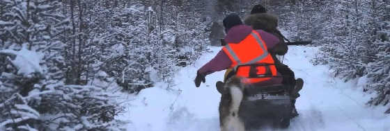 Зимняя коллективная охота