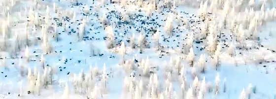 400 Волков в одной стае