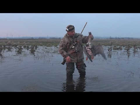 Охота на гуся. Каргополь