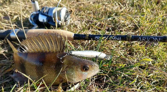лайт для малой реки Crazy Fish Arion-762ls