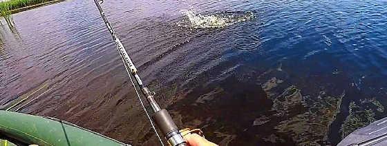 Рыбалка на щуку и окуня