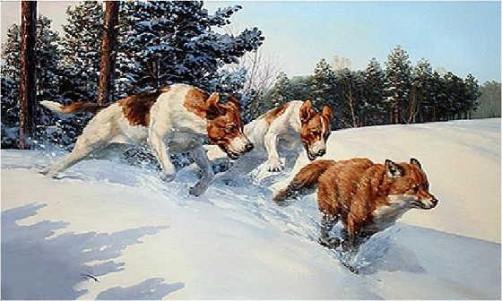 Охота на Лису с Гончими Собаками