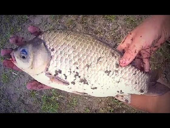 Рыбалка на закидушки с ночёвкой: ОГРОМНЫЙ САЗАН