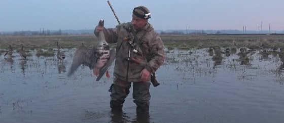 Охота на гуся: Рязанский колхоз