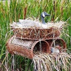 Строительство утиных гнезд