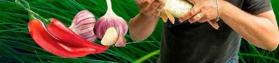 Ловим рыбу на чеснок и перец чили