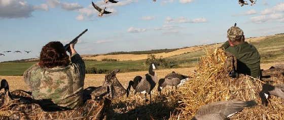 Охота на гусей и уток