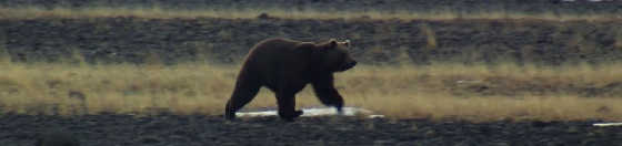 Нападение медведя на охотников
