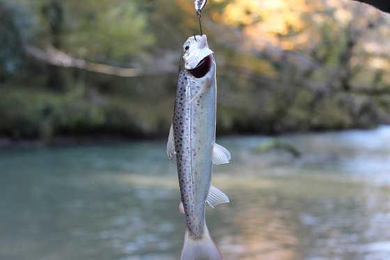 Потрясающая рыбалка в Абхазии