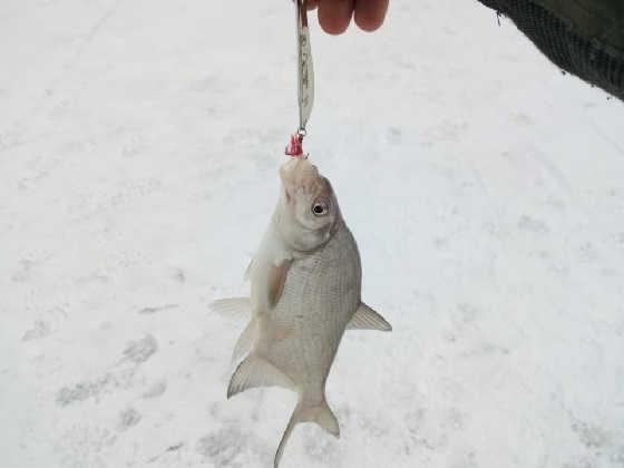 Рыбалка в ЗИМНЕМ ГОРОДЕ