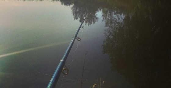 Рыбалка на сазана в большой луже