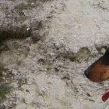 Охота с ягдтерьером: 2 лисы в норе