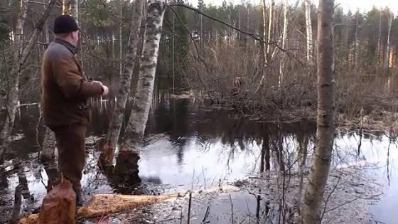 Охота на бобра с луком