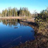 Гусь: Охота на болотах